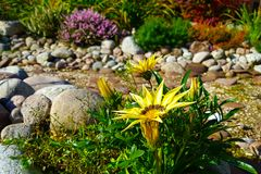 Ajardinar bonito com plantas bonitas, flores e a cama de angra seca do córrego no jardim no dia ensolarado Foto de Stock