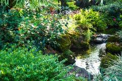 Ajardinar bonito com plantas e as flores bonitas Imagens de Stock