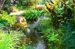 Ajardinar bonito com plantas e as flores bonitas Imagens de Stock Royalty Free