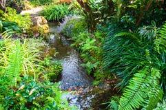 Ajardinar bonito com plantas e as flores bonitas Foto de Stock Royalty Free