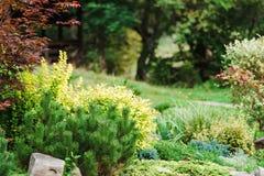 Ajardinar bonito no jardim Fotografia de Stock Royalty Free