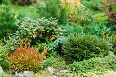 Ajardinar bonito no jardim Fotografia de Stock