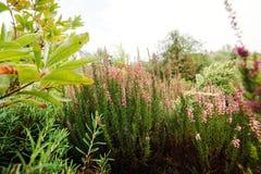 Ajardinar bonito no jardim Fotos de Stock Royalty Free