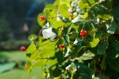 Ajardinar bonito no jardim home Imagem de Stock Royalty Free