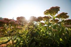 Ajardinar bonito no jardim home Imagens de Stock Royalty Free