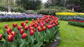 Ajardinar colorido em Keukenhof Países Baixos Foto de Stock