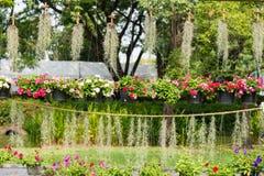 Ajardinar com flores do agrião e musgo espanhol Fotografia de Stock Royalty Free