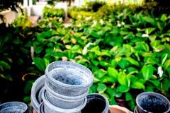 Ajardinar cultivado do ornamental Fotos de Stock