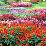 Ajardinar da flor Fotografia de Stock Royalty Free