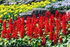 Ajardinar da flor Foto de Stock