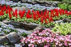 Ajardinar da flor Imagens de Stock Royalty Free