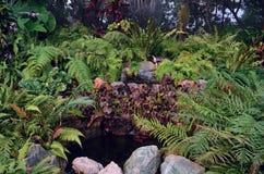 Ajardinar da lagoa Fotos de Stock Royalty Free