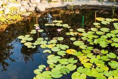 Ajardinar da lagoa do jardim Fotos de Stock
