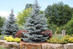 Ajardinar das árvores e dos arbustos alinhou com rochas maciças Imagem de Stock Royalty Free