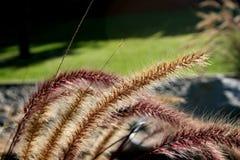 Ajardinar das plantas da lagoa Imagem de Stock Royalty Free