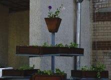 Ajardinar de pedra natural no jardim home Fotografia de Stock Royalty Free