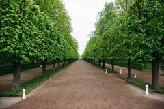 Ajardinar diseño decorativo Raws de árboles en callejón del parque Imágenes de archivo libres de regalías