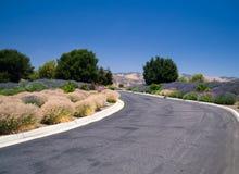 Ajardinar do deserto de Califórnia Imagens de Stock