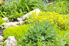 Ajardinar do fragmento do jardim Foto de Stock