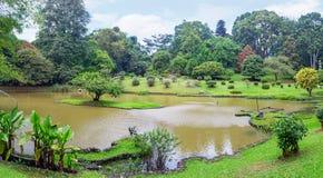 Ajardinar do jardim botânico de Kandy Foto de Stock