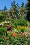 Ajardinar do jardim de rosas Fotografia de Stock Royalty Free