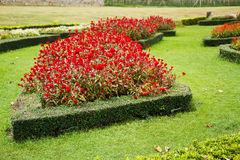 Ajardinar floral. Foto de Stock Royalty Free