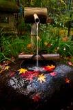 Ajardinar japonês tradicional do jardim Imagem de Stock Royalty Free