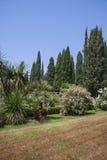 Ajardinar moderno com trajetos e as árvores exóticas Fotografia de Stock Royalty Free