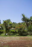 Ajardinar moderno com trajetos e as árvores exóticas Foto de Stock Royalty Free