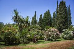 Ajardinar moderno com trajetos e as árvores exóticas Imagens de Stock Royalty Free