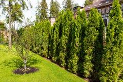 Ajardinar natural no jardim Imagem de Stock Royalty Free