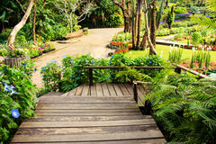 Ajardinar no jardim Imagem de Stock Royalty Free