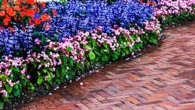 Ajardinar no jardim Foto de Stock Royalty Free