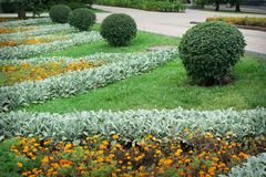 Ajardinar no jardim Trajeto no jardim Fotografia de Stock