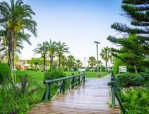 Ajardinar tropical com plantação e palmeiras Imagens de Stock