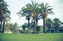 Ajardinar tropical com plantação e palmeiras Foto de Stock