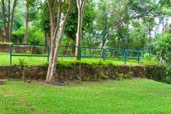 Ajardinar verde bonito com as plantas tropicais verdes da paisagem do parque no jardim asiático Fotos de Stock