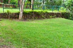Ajardinar verde bonito com as plantas tropicais verdes da paisagem do parque no jardim asiático Fotografia de Stock Royalty Free