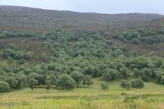Ajardine à proximidade da vila Braemar em Escócia no verão Foto de Stock