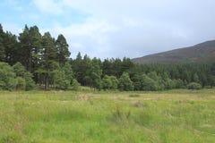 Ajardine à proximidade da vila Braemar em Escócia no verão Imagens de Stock