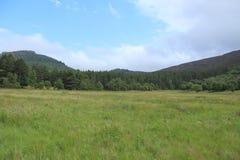 Ajardine à proximidade da vila Braemar em Escócia no verão Foto de Stock Royalty Free