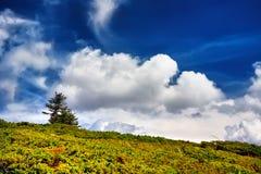 Ajardine a árvore e o campo da grama fresca verde sob o céu azul Imagens de Stock