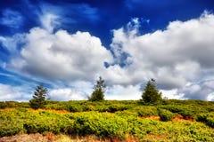 Ajardine a árvore e o campo da grama fresca verde sob o céu azul Imagem de Stock