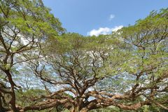 Ajardine a árvore grande Fotos de Stock