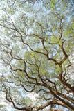 Ajardine a árvore grande Fotos de Stock Royalty Free