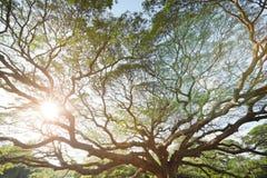 Ajardine a árvore grande Imagem de Stock