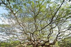 Ajardine a árvore grande Foto de Stock