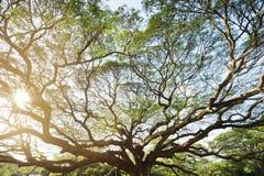 Ajardine a árvore grande Imagens de Stock