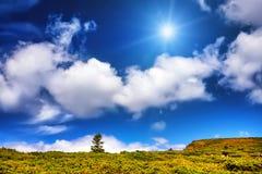 Ajardine a árvore sozinha e coloque-a sob o céu azul Foto de Stock
