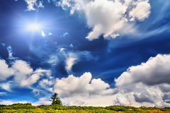 Ajardine a árvore sozinha e a grama fresca verde sob o céu azul Imagens de Stock